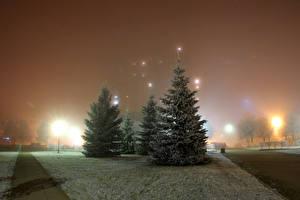 Фотография Россия Санкт-Петербург Парки Зима Ночью Ель Природа
