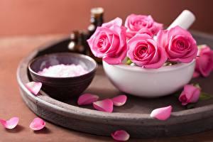 Фотография Розы Розовый Лепестки Цветы