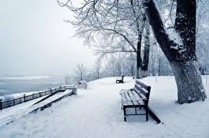 Обои Времена года Зима Снег Скамья Ствол дерева Природа