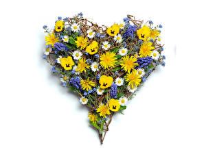 Картинка Ромашка Фиалка трёхцветная Наперстянка Сердце цветок