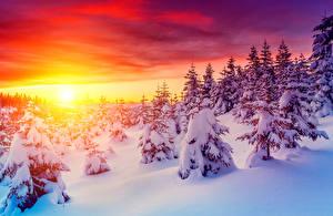 Фотографии Сезон года Зима Рассветы и закаты Небо Ель Снег Природа