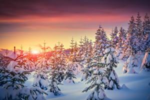 Фото Времена года Зимние Рассветы и закаты Ель Снег Природа