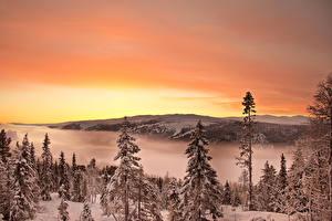Картинки Пейзаж Сезон года Зима Реки Рассветы и закаты Ель Природа