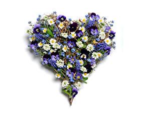 Фотографии Фиалка трёхцветная Ромашка Морозник Сердце