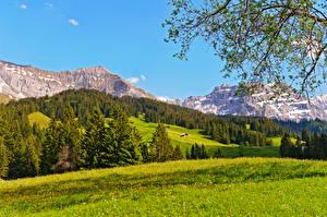 Фотографии Швейцария Пейзаж Гора Берн Ель Трава Bernese Oberland Природа