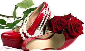 Картинка Роза Украшения Жемчуг Бордовый Туфель цветок