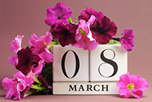 Фото Праздники Международный женский день Петунья цветок