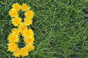 Картинка Праздники Международный женский день Одуванчики Траве цветок