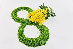 Фотографии Праздники Международный женский день Акация серебристая Цветы