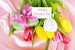 Фотография Праздники Международный женский день Тюльпаны Бант цветок