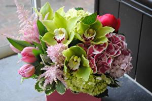 Фотографии Букет Тюльпан Орхидея Гортензия Морозник
