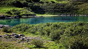 Картинки Озеро Камчатка Кусты Природа