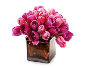 Картинка Тюльпан Много Бордовый Вазы Цветы