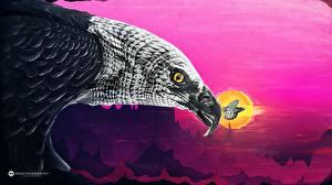 Обои Орел Бабочки Креативные Клюв животное