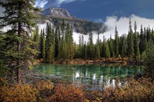 Фото Канада Парк Озеро Горы Банф Ели Природа