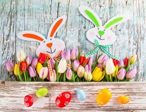 Фотографии Тюльпан Много Праздники Пасха Кролик Яйцо цветок