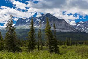 Картинки США Парк Пейзаж Горы Ели Трава Облака Glacier Montana Природа