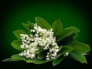 Фото Букеты Ландыши Листья Цветы