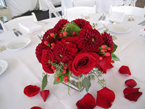 Картинка Георгины Розы Лепестки Бордовый Цветы