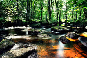 Фотография Швеция Леса Река Камни Vastra Gotaland Природа