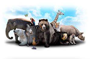 Картинки Слоны Медведь Жирафы Зебры Бегемоты