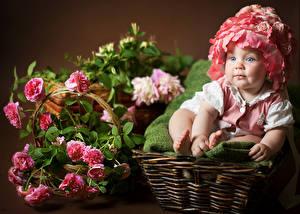 Фото Розы Младенцы Девочка Корзинка В шапке ребёнок