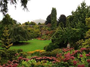 Фото Канада Сады Дерево Кусты Газоне Van Dusen Gardens Vancouver Природа