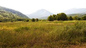 Картинка Россия Поля Горы Камчатка Трава Природа