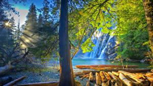 Обои США Водопады Реки Лучи света Ствол дерева HDR Virgin Falls Tennessee Природа фото