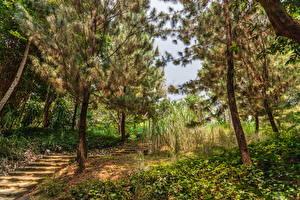 Картинка Сингапур Сады Деревья Лестница Botanic Gardens Природа