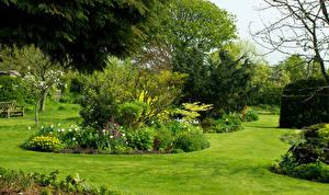 Фото Великобритания Сады Газон Кустов Bluebell Cottage Garden Dutton Природа