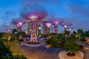 Фотографии Сингапур Сады Ночь Дерево Дизайна Gardens by the Bay Природа