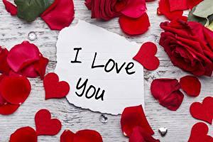 Фото Праздники Роза День святого Валентина Лепестков Красный Слова I love you Цветы