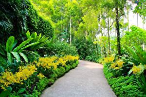 Картинки Сингапур Сады Кусты Деревьев Botanic Gardens Природа