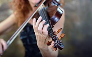 Фото Скрипки Музыкальные инструменты Крупным планом Музыка Девушки