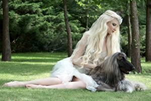 Фотографии Собаки Борзые Блондинка Афганская борзая Животные Девушки