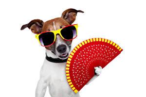 Картинка Собака Очки Джек-рассел-терьер Забавные Животные