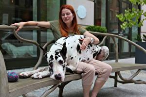 Картинки Собака Немецкий дог Рыжая Скамейка животное Девушки