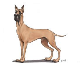 Фотографии Собаки Рисованные Немецкий дог Животные