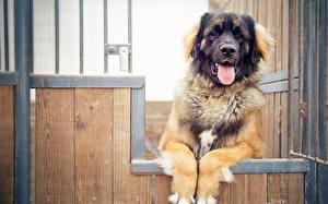 Фотографии Собаки Забора Животные