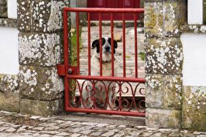 Фото Собака Забором Животные