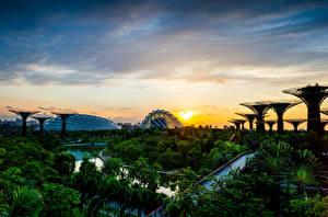 Картинка Сингапур Сады Рассветы и закаты Пейзаж Небо Деревьев Gardens by the Bay Природа