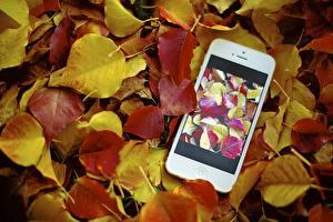 Обои Осенние Apple Крупным планом iPhone Телефон Листва Смартфоны Jamie Frith
