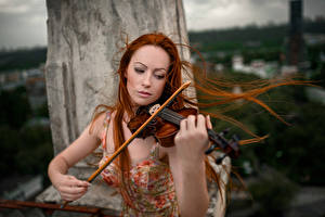 Картинка Скрипка Рыжих Волосы молодые женщины