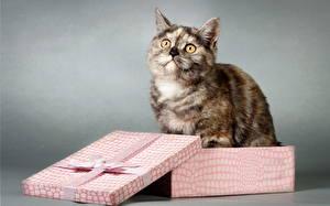 Картинка Коты Смотрит Подарки Коробка Животные