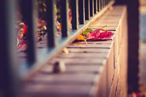 Картинка Осень Вблизи Листва Забором Природа