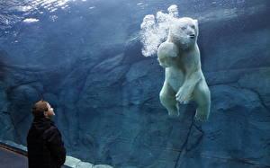 Фото Медведи Полярный Вода Мальчишки Плавает Животные Дети