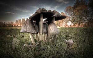 Картинка Лес Вблизи Грибы природа Трава HDR