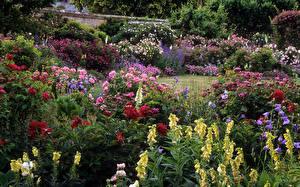 Фото Сады Дигиталис Роза Пионы Колокольчики - Цветы Кусты цветок Природа