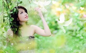 Картинка Голуби Птицы Азиаты Брюнетка девушка